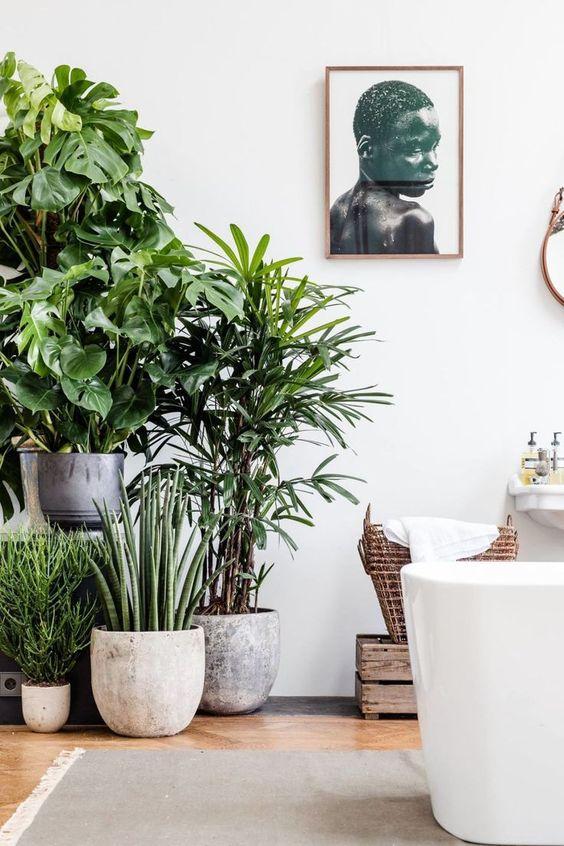 Plantes et déco